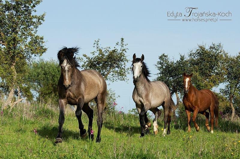 pf13862-herdade-t0-aljustrel-9
