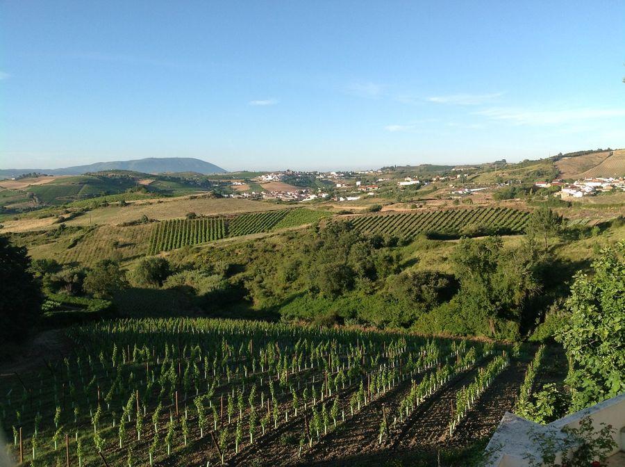 Landgut / Bauernhof / Plantage für Verkauf beim Estate in Sobral de Monte Agraço, in Torres Vedras Lissabon, Portugal